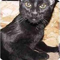 Adopt A Pet :: Duff - Strathmore, AB
