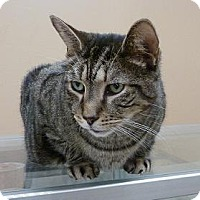 Adopt A Pet :: Simon - Massapequa, NY