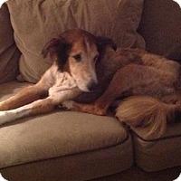 Adopt A Pet :: Trina - Stafford, TX