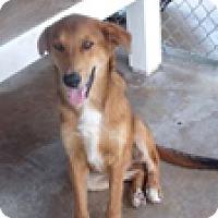 Adopt A Pet :: Romeo - Hatifeld, PA