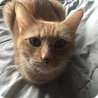 Adopt A Pet :: Jayde - Colorado Springs, CO