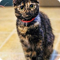 Adopt A Pet :: Olivia - Markham, ON