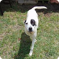 Adopt A Pet :: Hoot - Lufkin, TX