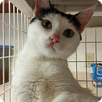 Adopt A Pet :: Kaye - Chambersburg, PA