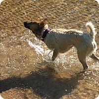 Adopt A Pet :: Lucy $125 - Seneca, SC