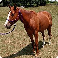 Adopt A Pet :: Millie $2000 - Seneca, SC