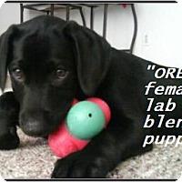 Adopt A Pet :: Oreo - El Cajon, CA
