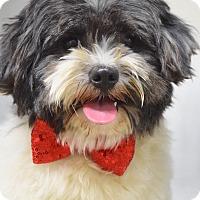 Adopt A Pet :: Basil - Dublin, CA