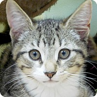 Adopt A Pet :: Mercury - Reduced Fee! - Jefferson, WI
