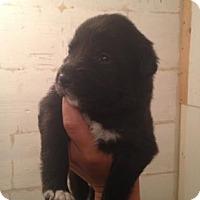 Adopt A Pet :: Jabba - Saskatoon, SK
