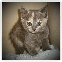 Adopt A Pet :: ALBANY - Medford, WI
