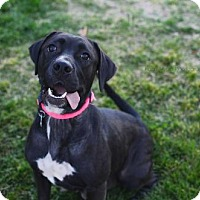Adopt A Pet :: Pimi - Salt Lake City, UT