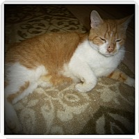 Adopt A Pet :: FRANKIE - Medford, WI