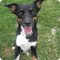 Adopt A Pet :: Lucee - Huntley, IL