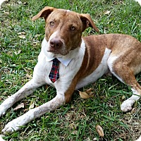 Adopt A Pet :: Rogue - Houston, TX