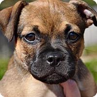 Adopt A Pet :: Ethel - Mobile, AL