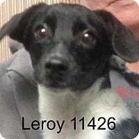 Adopt A Pet :: Leroy - baltimore, MD