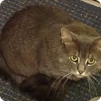 Adopt A Pet :: Barney - Sheboygan, WI