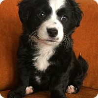 Adopt A Pet :: Cowboy - San Diego, CA