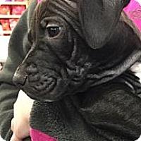 Adopt A Pet :: Dunder - Ronkonkoma, NY