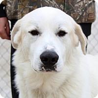 Adopt A Pet :: Bruno - Waco, TX