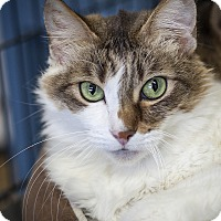 Adopt A Pet :: Elliot - St Helena, CA