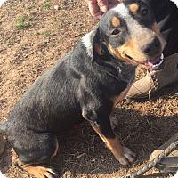Adopt A Pet :: Jasmine - Manchester, CT