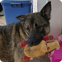 Adopt A Pet :: Callie - Pembroke, GA