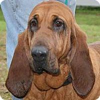 Adopt A Pet :: ELLIE! - St, Augustine, FL