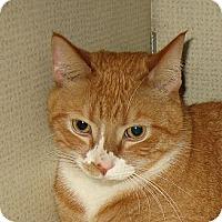 Adopt A Pet :: SHELDON -2013 - Hamilton, NJ
