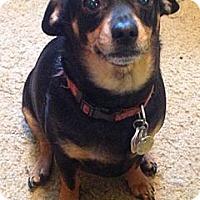 Adopt A Pet :: COCOA AND LEVI - Portland, OR