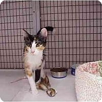 Adopt A Pet :: Candace & Lotus - Deerfield Beach, FL