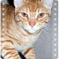 Adopt A Pet :: Max - Mobile, AL