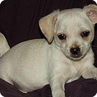 Adopt A Pet :: Chunk - Phoenix, AZ