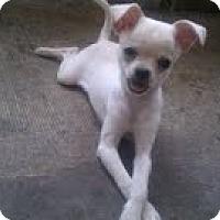Adopt A Pet :: Snow - Orange Park, FL