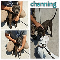 Adopt A Pet :: Channing - Owasso, OK