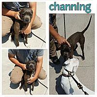Adopt A Pet :: Channing - Owasso, OK