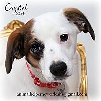 Adopt A Pet :: Crystal - Metairie, LA