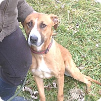 Adopt A Pet :: #379-14 RESCUED! - Zanesville, OH