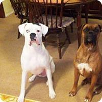 Adopt A Pet :: Frazier - Turnersville, NJ