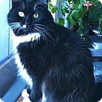 Adopt A Pet :: Molly - Novato, CA