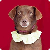 Adopt A Pet :: Ophelia - San Marcos, CA