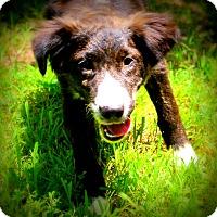 Adopt A Pet :: Rosario~meet me! - Glastonbury, CT