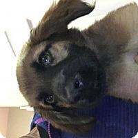Adopt A Pet :: Leo - Palatine/Kildeer/Buffalo Grove, IL