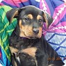 Adopt A Pet :: Champ (7 lb) Video!