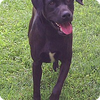 Adopt A Pet :: Duke - Metamora, IN