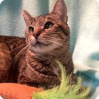 Adopt A Pet :: Suki - Bloomsburg, PA