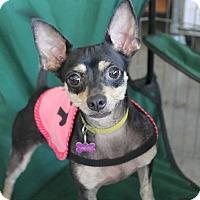Adopt A Pet :: NeNe - Los Angeles, CA