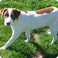 Adopt A Pet :: Stevie - Reno, NV