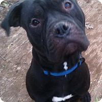 Adopt A Pet :: Alex - Sylacauga, AL